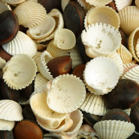 Collecting seashells is just one relaxing activity to be enjoyed on Mexico's beaches.