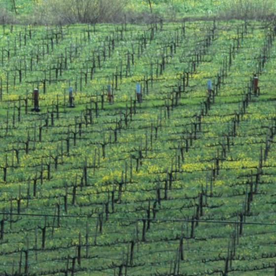 Guests from Sacramento can visit the Napa Valley vineyards via coach bus or limousine.