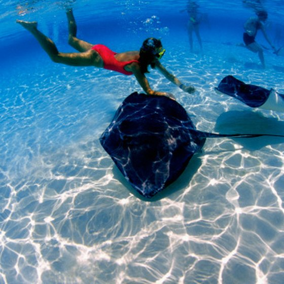 Snorkeling with stingrays is just one option in Grand Cayman.