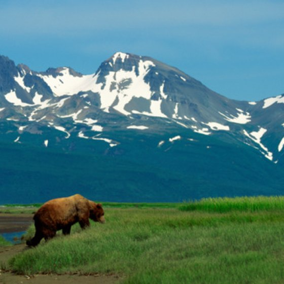 Photograph grizzly bears in Alaska using a telephoto lens.