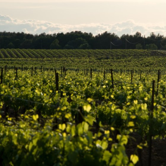 Vineyards in France are one destination for European wine tasting trips.