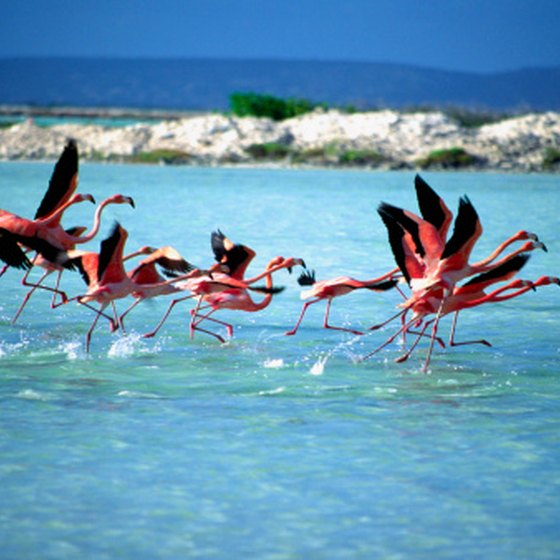 Bonaire's airport takes its name from the island's flamingos.