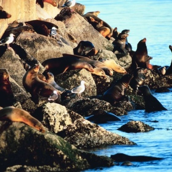 A Trip On 17 Mile Drive Can Offer Up Close Views Of Sea Lions