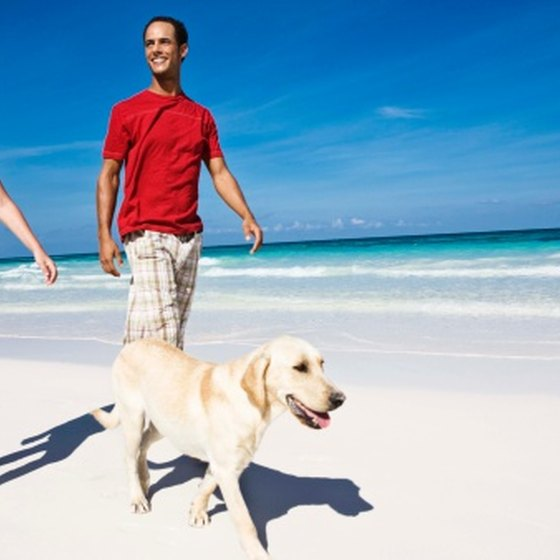 You can take your dog to the beach with you.