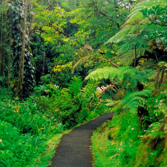Akaka Falls State Park is a draw on the Big Island.