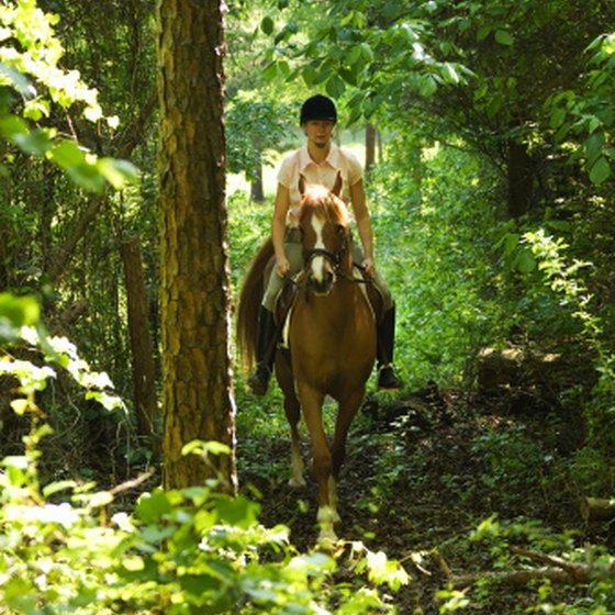 Places to Go Horseback Riding Near Hendersonville, North