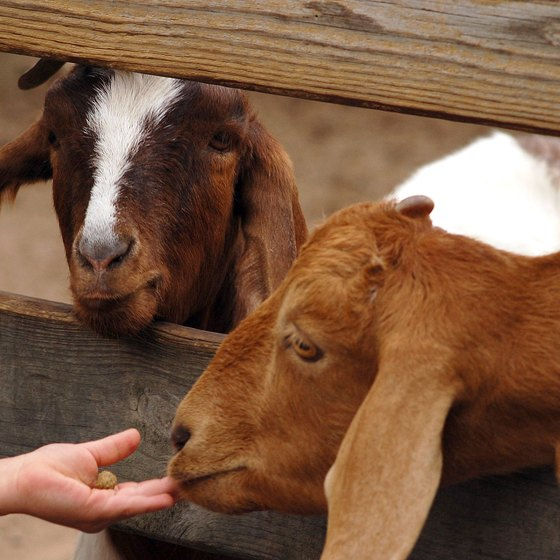 Petting Zoos in Pigeon Forge, Tennessee