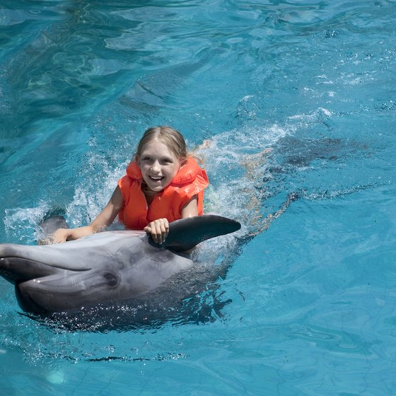 Swimming With Dolphins In Daytona Beach
