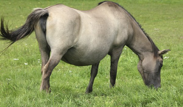 Pregnancy Stages in Horses