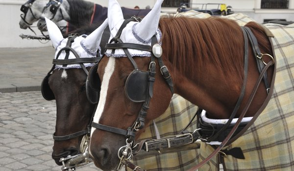Why Do Horses Wear Blindfolds?