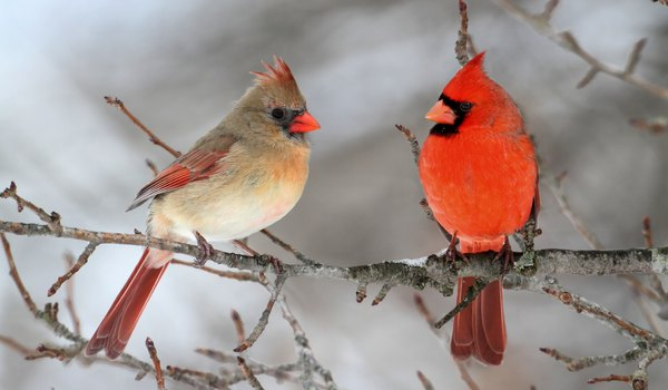 How to Attract Cardinals to a Bird Feeder