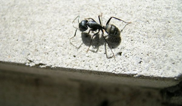 How to Get Rid of Ants on the Roof