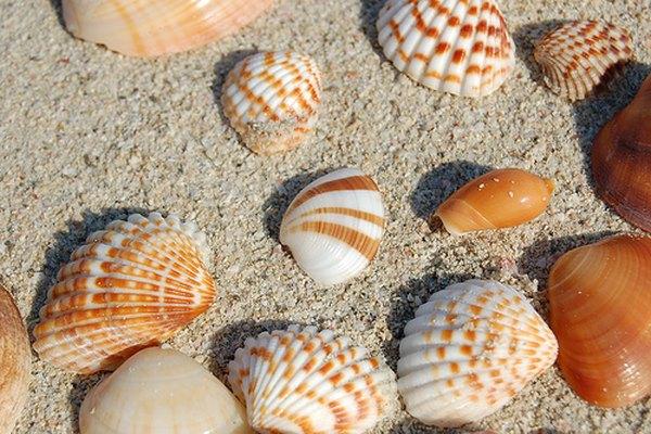 Coleccionar conchas marinas es una afición interesante.