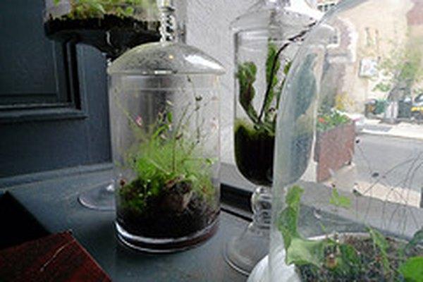 Haz un terrario para observar los ecosistemas de la naturaleza.