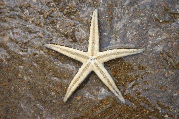 Encuentra estrellas de mar.