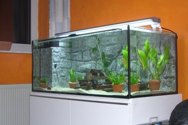 Measure the pH level in aquarium water using a pH meter.