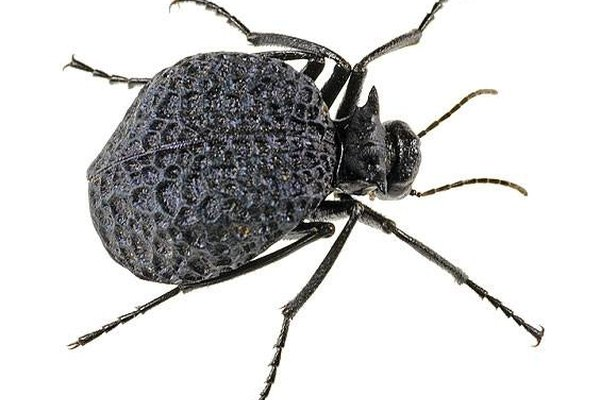 About Blister Beetle Bites | Healthy Living