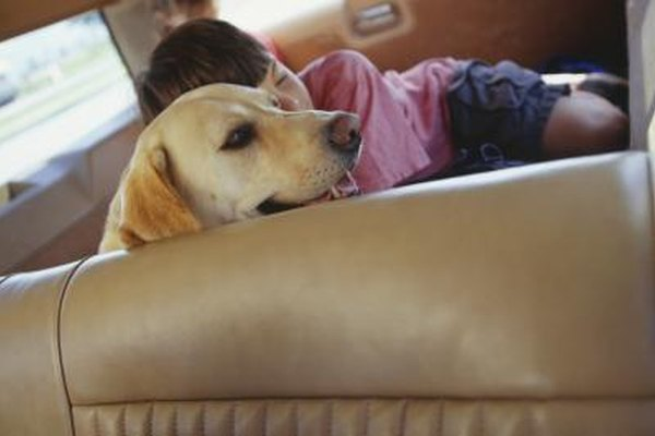 Pets, especially large dogs, can damage your leather seats.