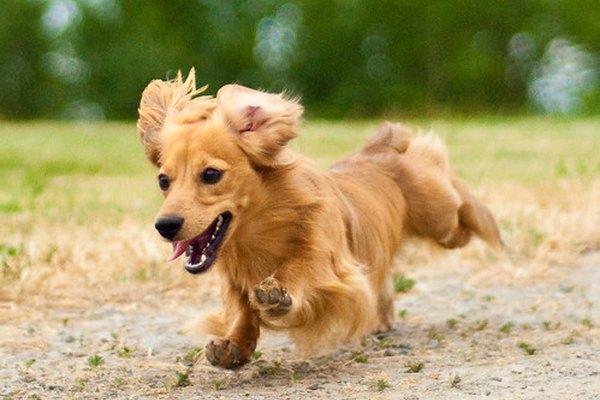 Los perros y las personas tienen algunas similitudes.