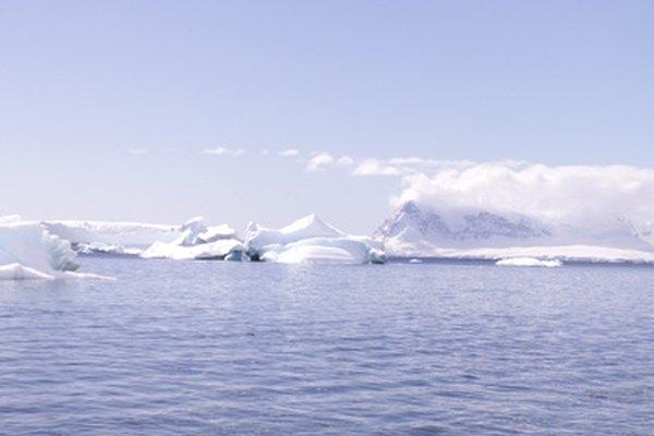 El mar alrededor de la Antártida tiene una gran variedad de animales.