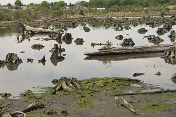 Un ecosistema o hábitat, es el medio de vida de plantas y animales y la forma en que interactúan y dependen unos de otros.