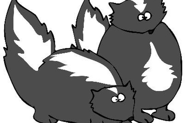 Los zorrillos negros con rayas blancas son famosos por la sustancia de mal olor con la que rocían a sus depredadores.