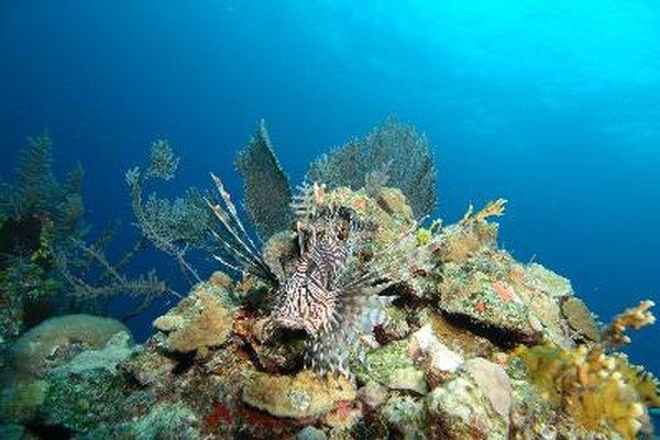 Los arrecifes se encuentran entre los rasgos más conocidos y buscados en el mundo bajo el agua.