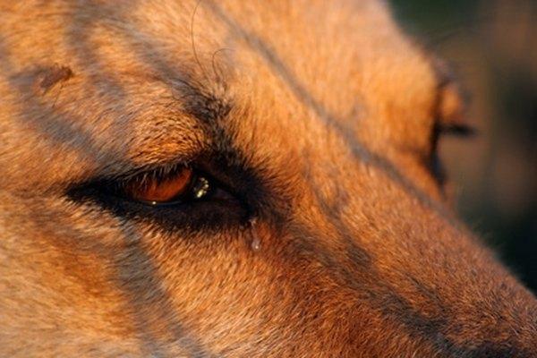 Los tejidos del ojo hinchados son el resultado de alergias, anormalidades o infecciones