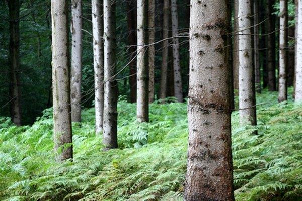 Los helechos se encuentran regularmente en áreas húmedas y sombrías en los bosques.