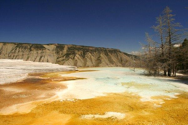 Las arqueobacterias se descubrieron por primera vez en las aguas termales del Parque Nacional Yellowstone.