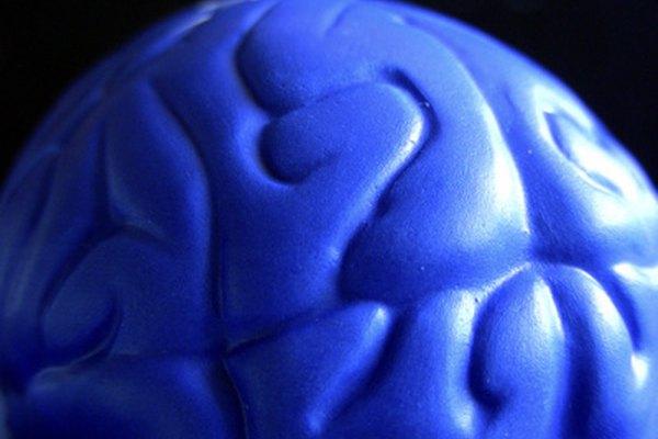 La psicología a menudo estudia el cerebro como fuente de respuestas de comportamiento.