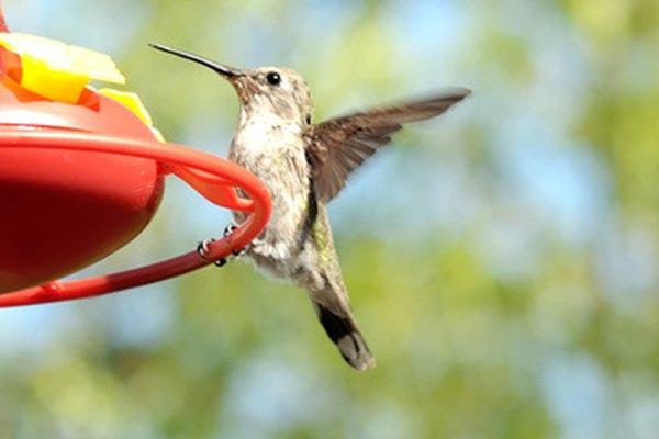 Los colibríes nunca parecen detenerse.