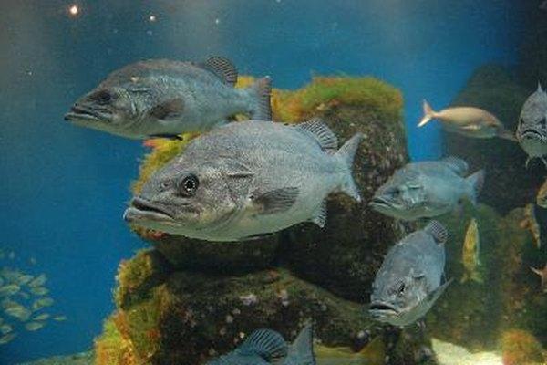 Ecosistema acuático.