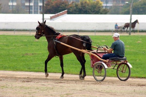 Un caballo tiraba la calesa de 2 ruedas.