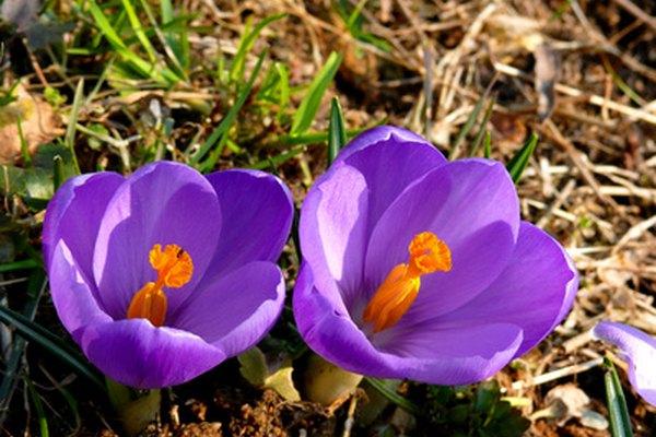 Las partes internas de una planta pueden ser igual de fascinantes que sus hermosos colores