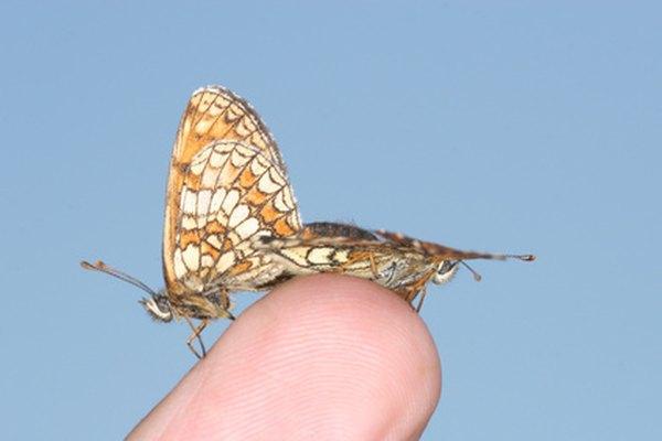 El Amazonas es el hogar de una abundancia de mariposas.