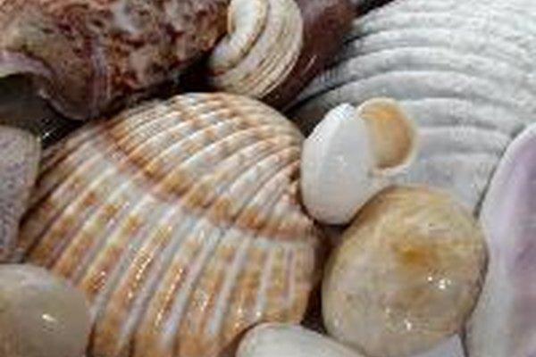 Los mejillones comprenden una familia de marisco que contiene más de 250 especies diferentes.