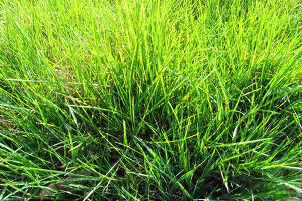 Las plantas realizan fotosíntesis usando el dióxido de carbono.