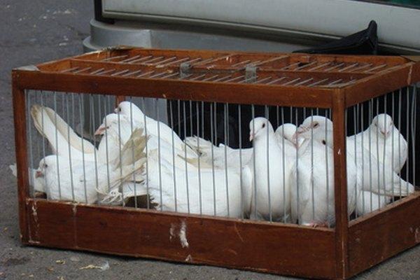 Liberar palomas es una forma bella de terminar una ceremonia de boda.