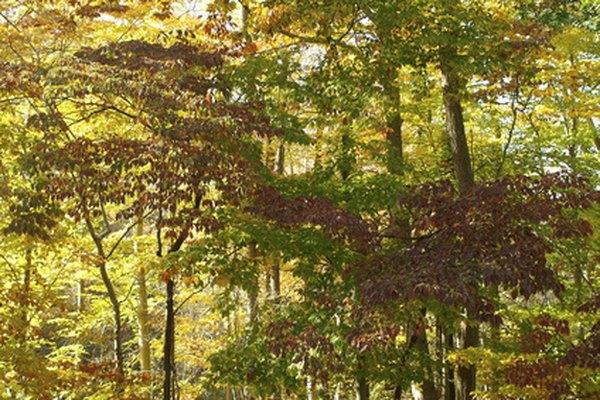 Las Montañas Apalaches son el hogar de uno de los ecosistemas más diversos y sostenibles del planeta.