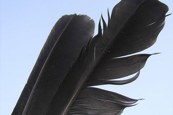 Una actividad que combine el aceite de cocina con plumas de aves mostrará a los estudiantes el daño que provoca el petróleo en las aves.