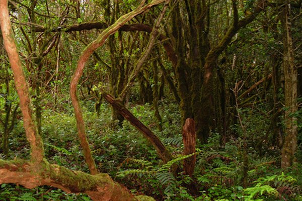 La conservación y la preservación de un ecosistema son importantes.