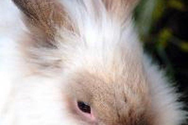 Para y vuelve a intentarlo al día siguiente, si tu conejo se resiste tenazmente, no lo fuerces demasiado.
