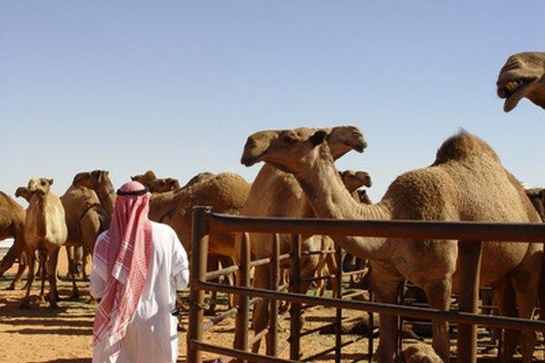 Las fiestas temáticas árabes resultan muy divertidas y originales.