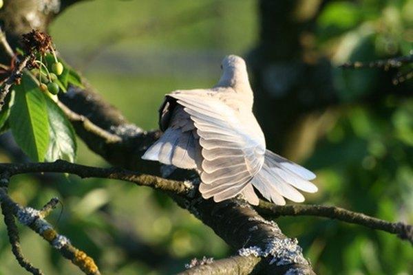 Las palomas blancas pueden simbolizar la pureza y la inocencia de la relación matrimonial.