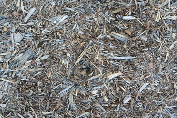 Los árboles se cortan en trozos antes de procesarlos en pulpa.