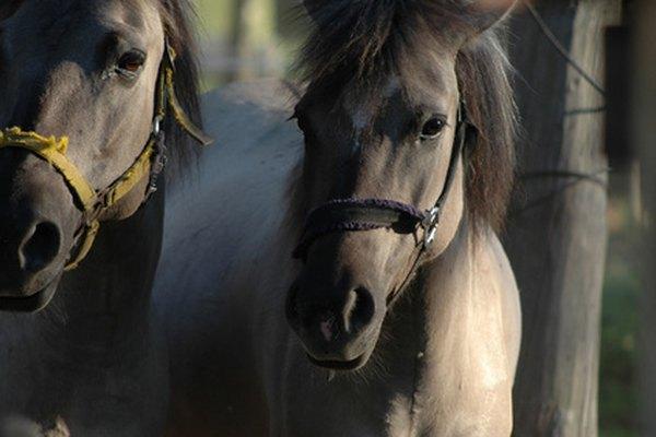 Las empresas minoristas de caballos son muy populares entre los amantes de los caballos.