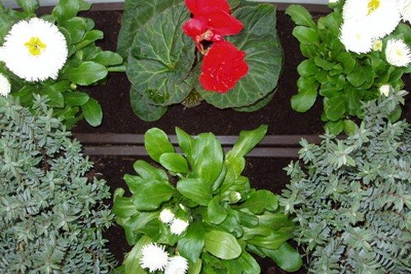 Haz aromas para vela con hierbas frescas.