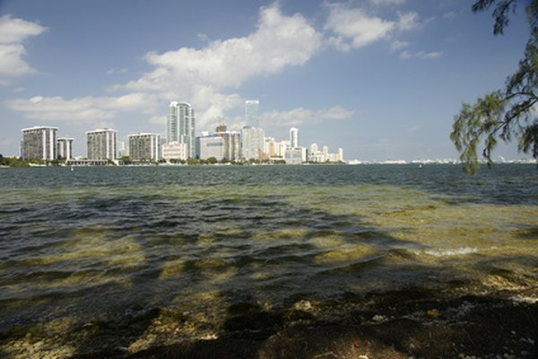 Aunque son limitados, puedes encontrar clubes para menores de 21 en Miami.