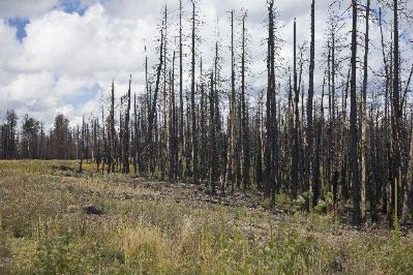 Las comunidades de vegetación, en gran medida determinadas por el clima, influyen y son influidas por los suelos.